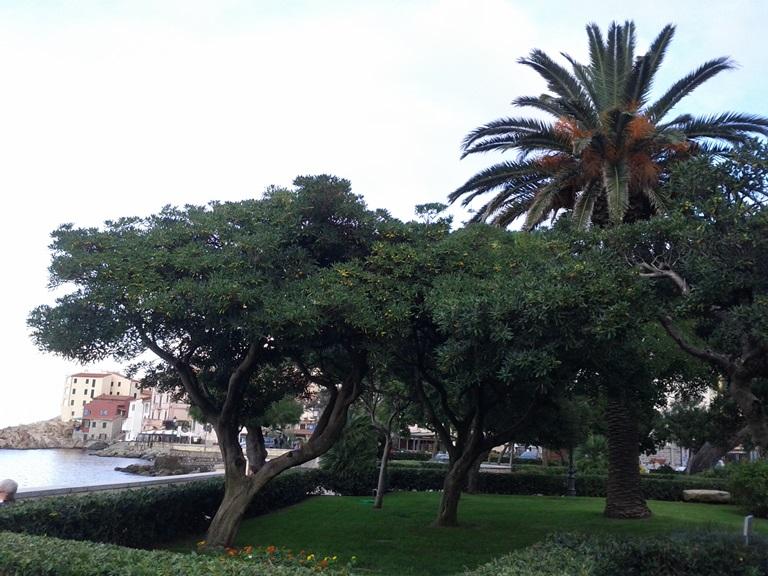 Trees at Marciana Marina