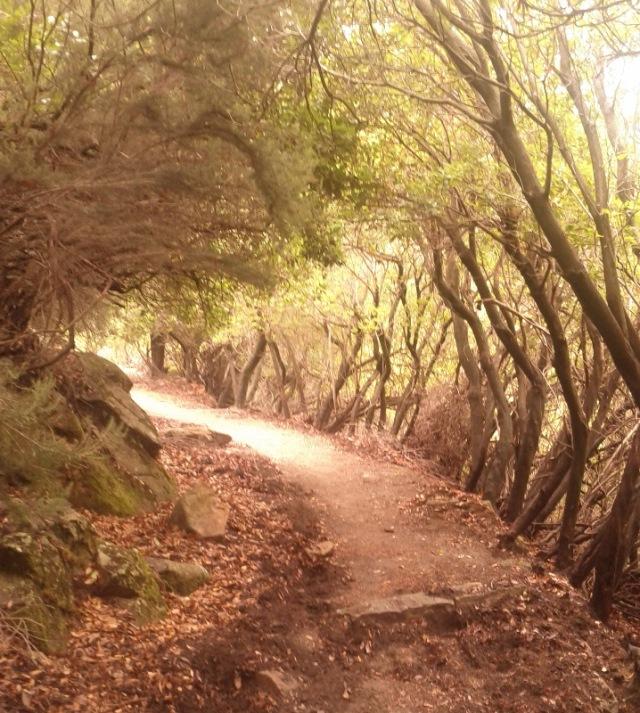 Ancient mule path